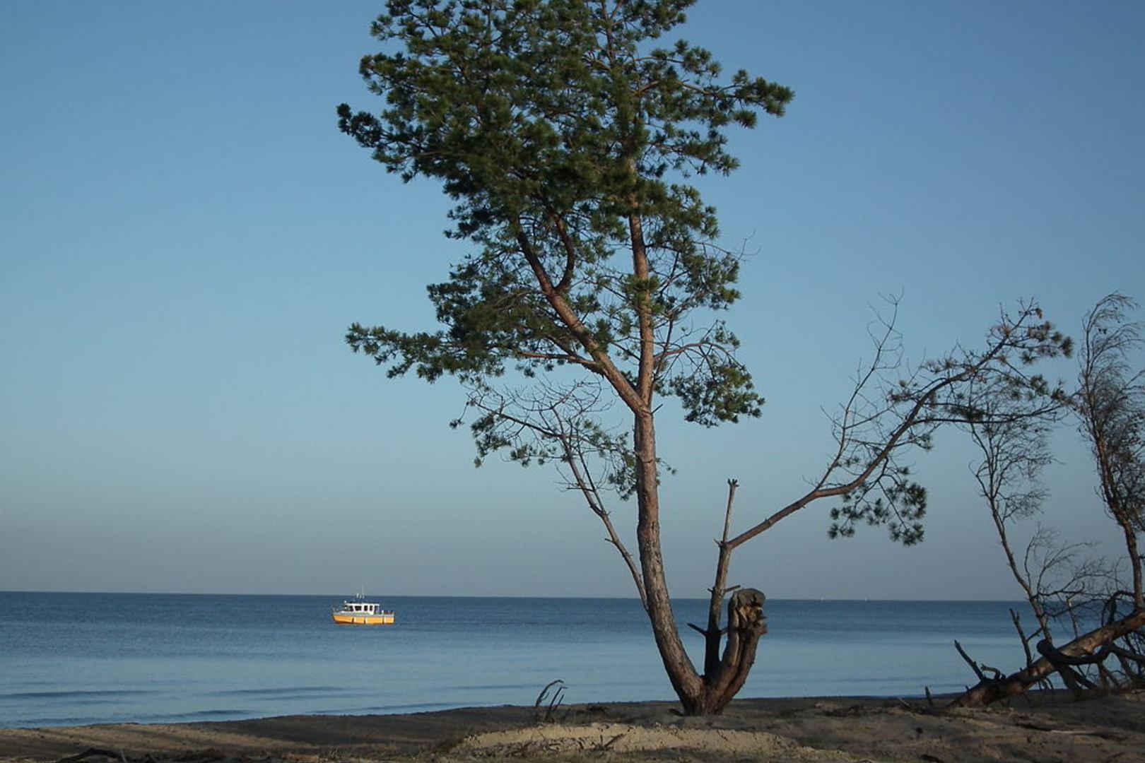 Pytanie w Milionerach o Wyspę Sobieszewską