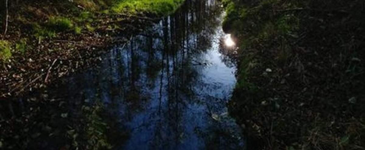 Rzeka Trująca