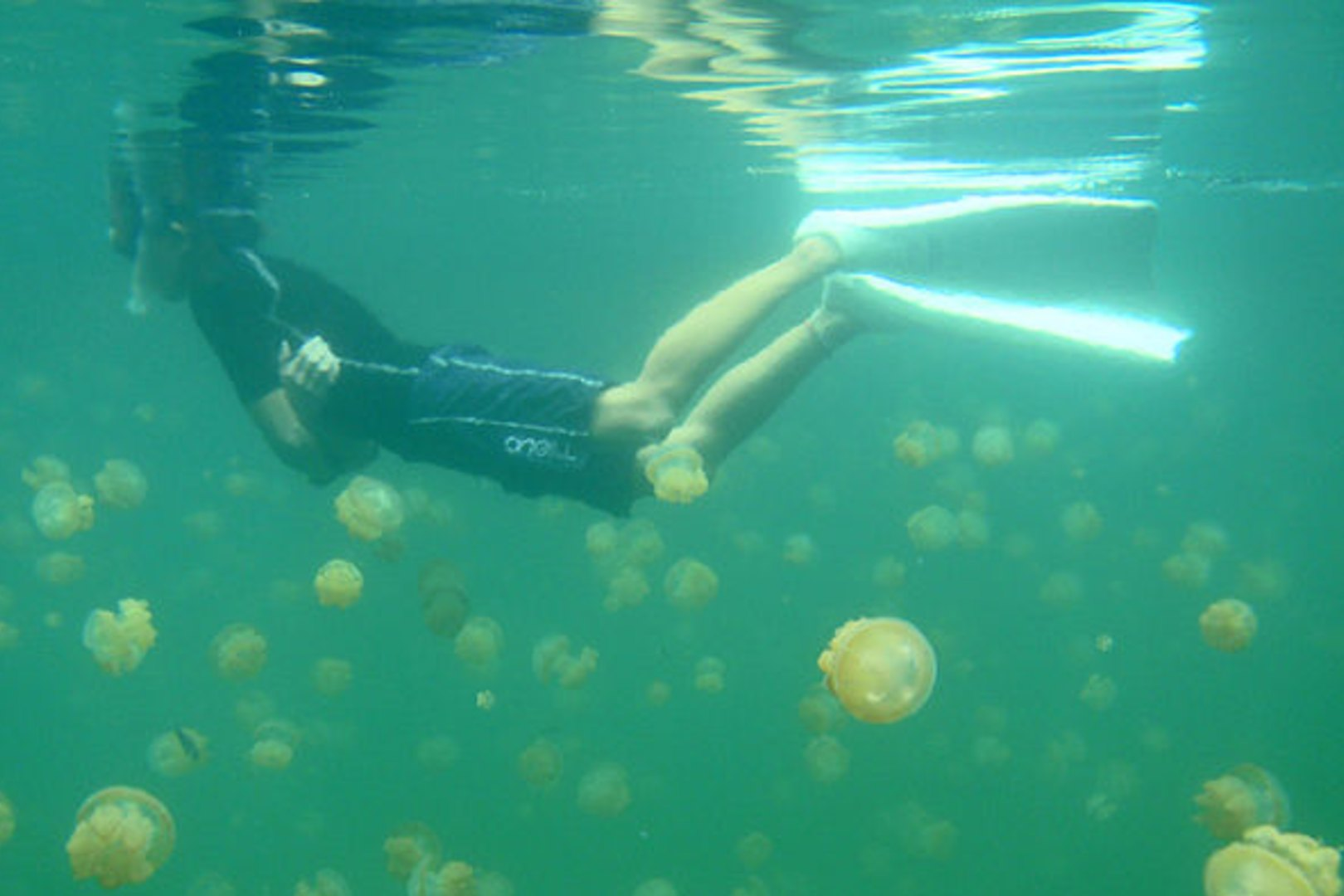 Turyści w Palau mogą pływać w Jeziorze Meduz
