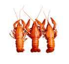 Meat, Seafood and Poultry