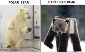 bears-300x185