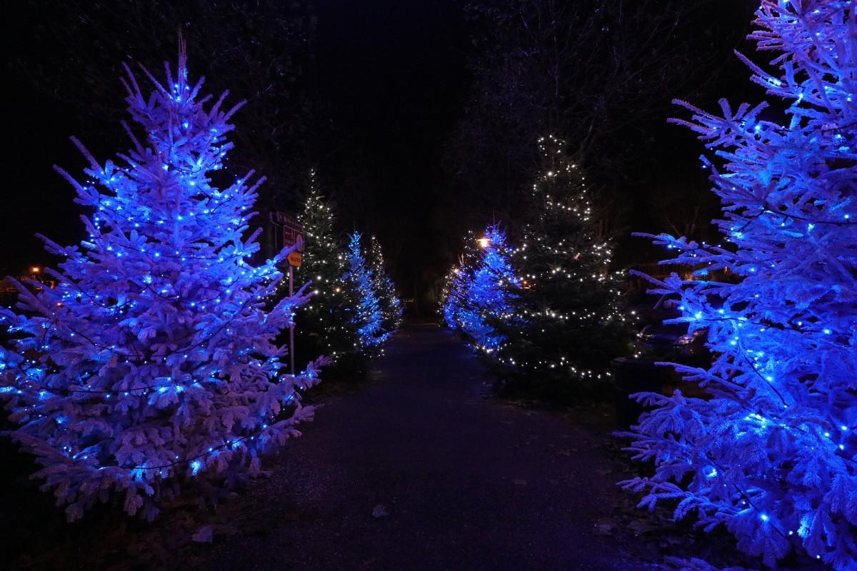 Albero Di Natale 852 Bambini.Offerte Vacanze Di Natale Offerte Viaggi A Natale Vrbo Italia