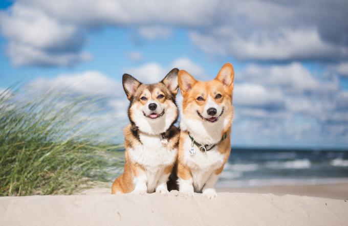 Playas Para Perros En Cantabria Playas Pet Friendly Vrbo España