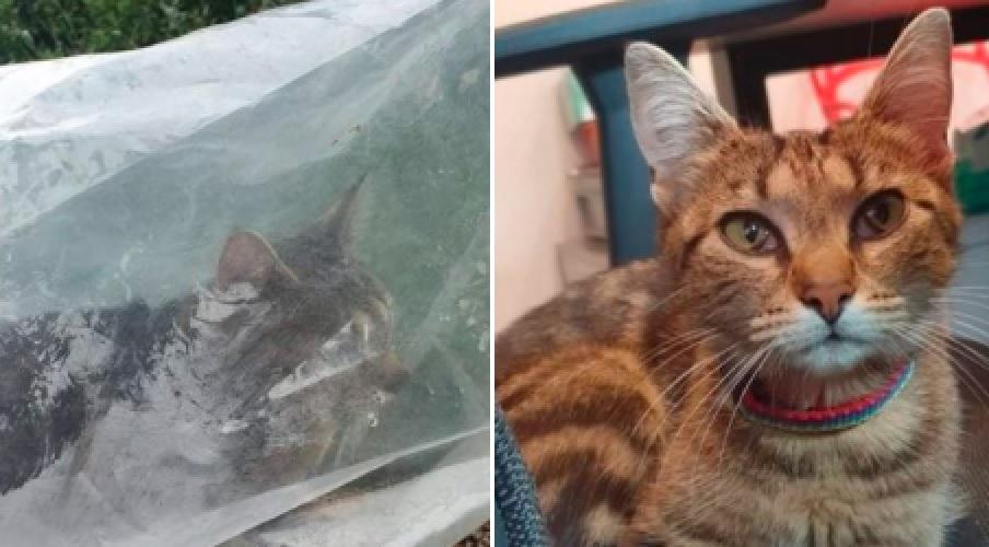 Wyrzucił kotkę z auta. Była w plastikowym worku zawiązanym drutem