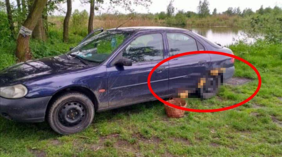 Ford Mondeo wyrosły grzyby