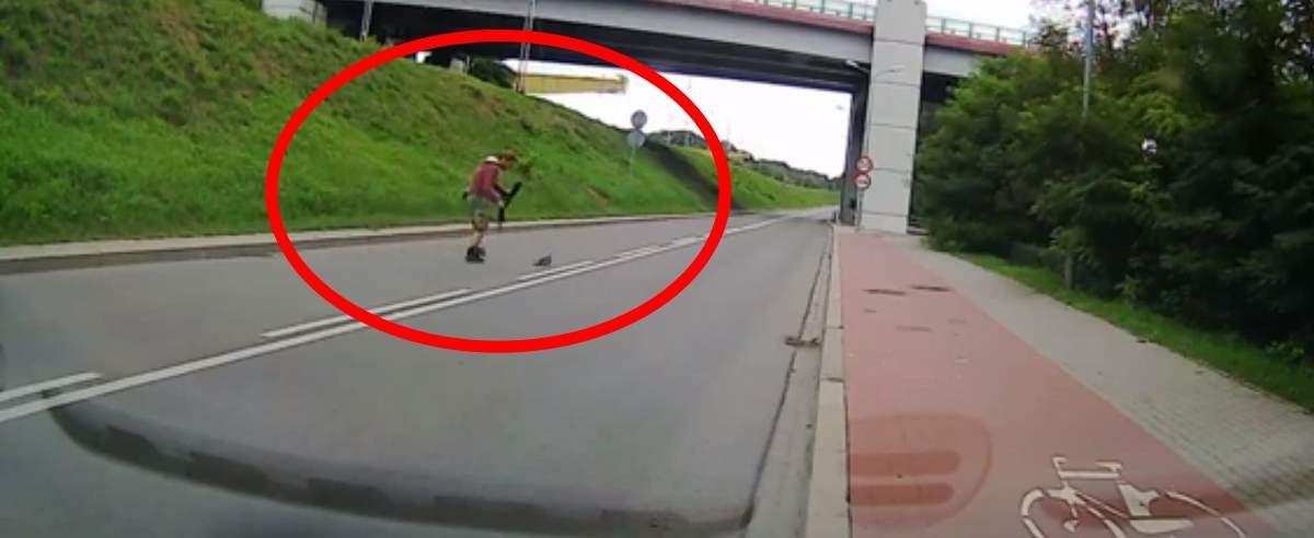 Kierowca pomógł gołębiowi