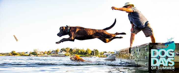 The Dog Days of Summer Are Here: Stay Cool. Save Money.