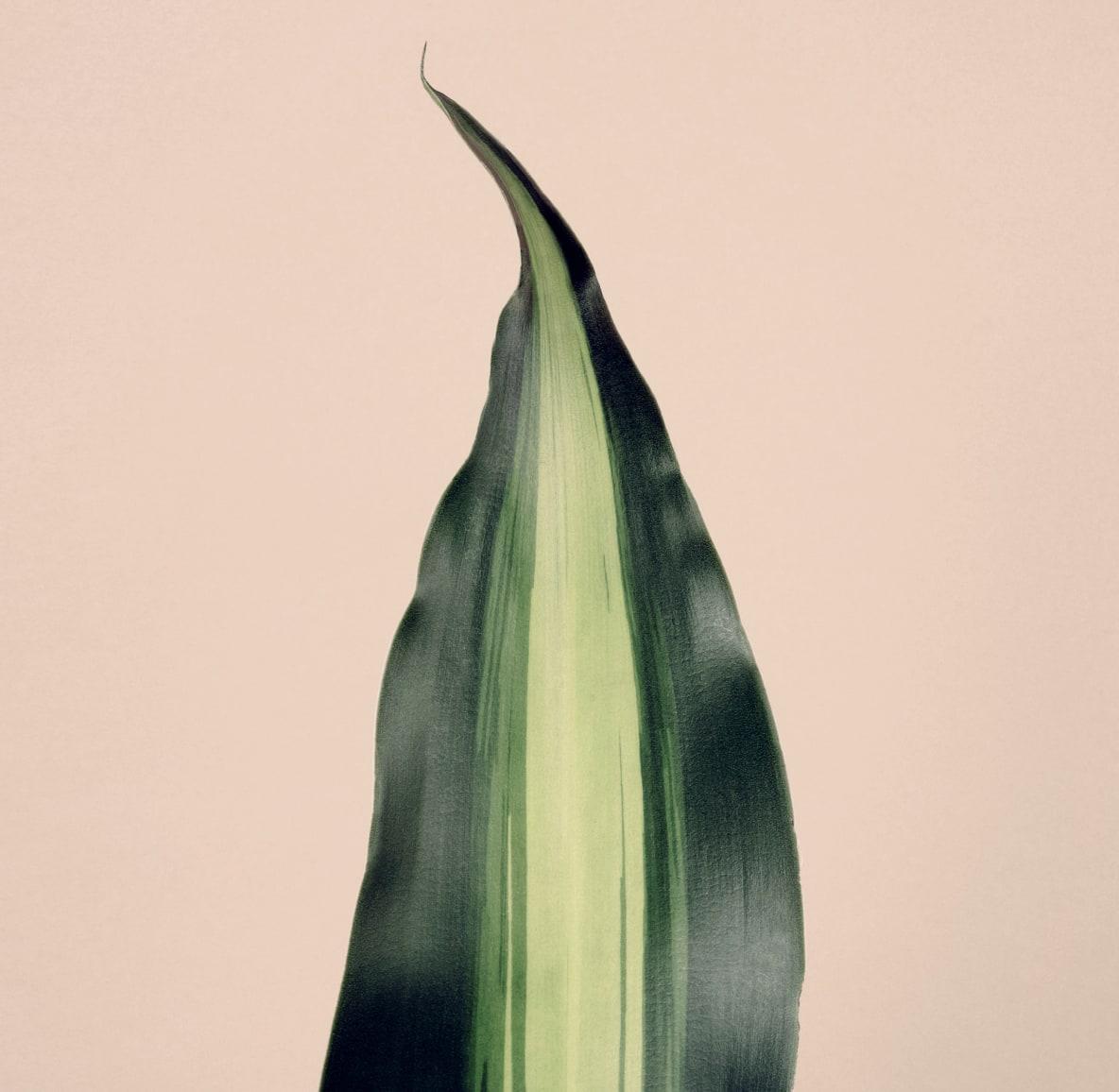 Single leaf of green plant