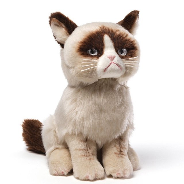 The Worlds Grumpiest Cat Grumpy Cat - Meet the japanese cat that might just be the grumpiest kitty ever