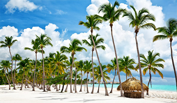 Pristine beach lined with palm trees