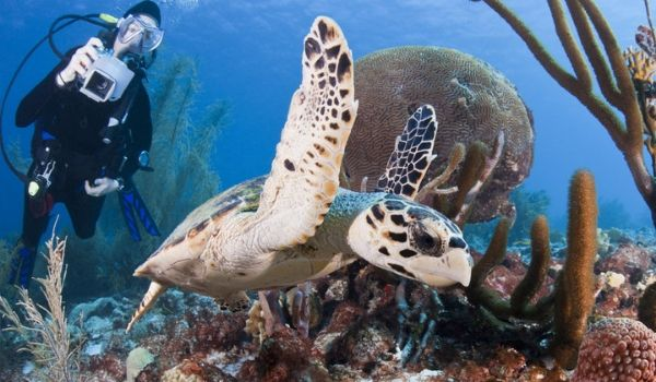 Person scuba diving by a sea turtle in a coral reef