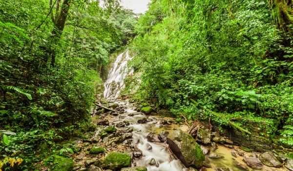 Waterfall running through a lush dense rainforest with a stream at the bottom