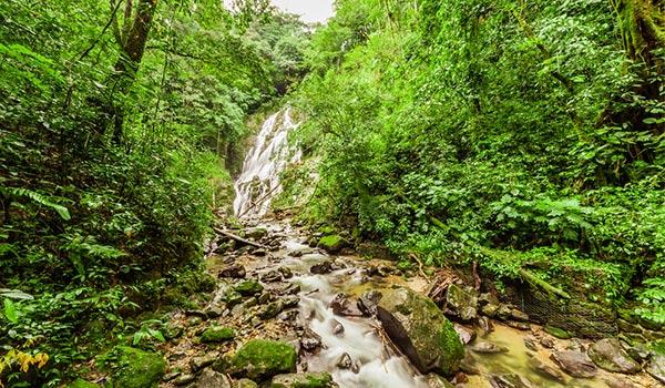 Chute d'eau dans une forêt vierge dense et luxuriante formant un ruisseau