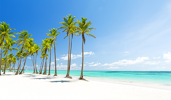 People walking along a palm-lined beach