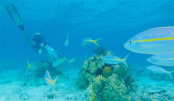 Personne faisant de la plongée avec tuba parmi les poissons tropicaux