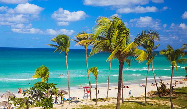 Plage de sable blanc bordée de palmiers et d'eaux tranquilles