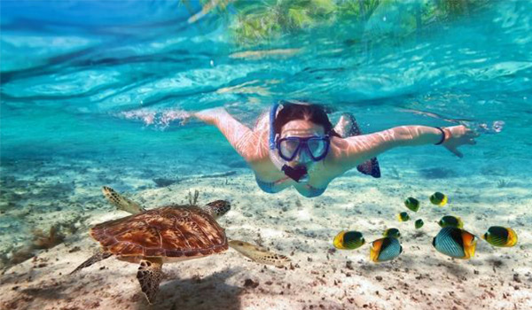 Underwater shot of person snorkelling by colourful fish and a sea turtle