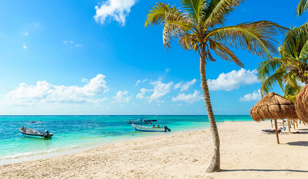 White-sand beach lined with palm trees
