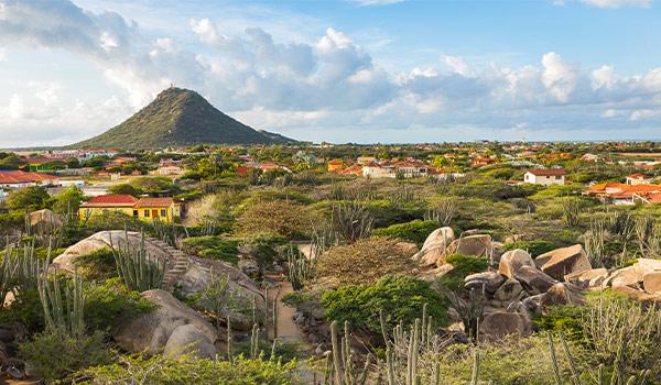 Arbres Divi Divi sur une plage d'Aruba