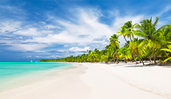 Pristine deserted beach with lush palms lining the shores