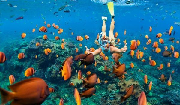 Femme faisant de la plongée avec tuba parmi un banc de poissons tropicaux