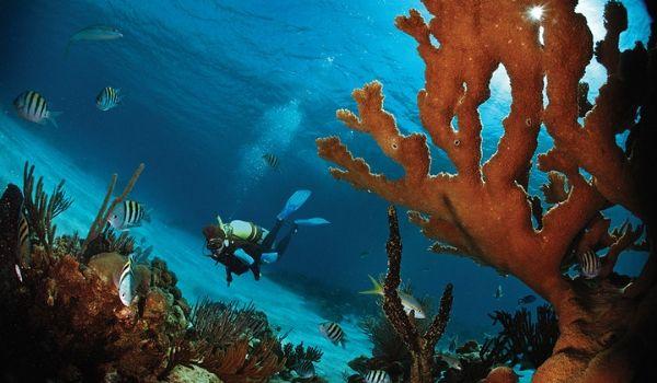 Person scuba diving through a coral reef
