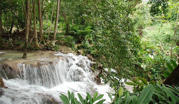 The majestic Dunns River Falls nestled in the lush jungle