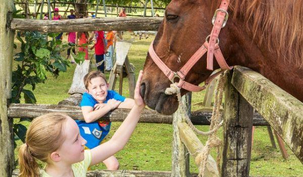 Enfants flattant un cheval