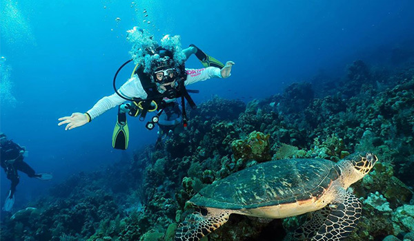 Person scuba diving next to a sea turtle, above a coral reef