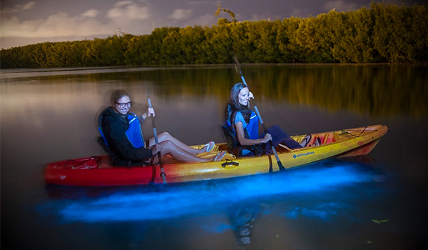 Two people kayaking through a lagoon with water glowing blue underneath them