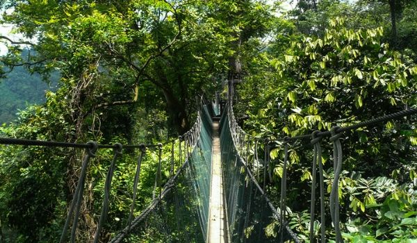 Rope bridge crossing over the lush rainforest treetops