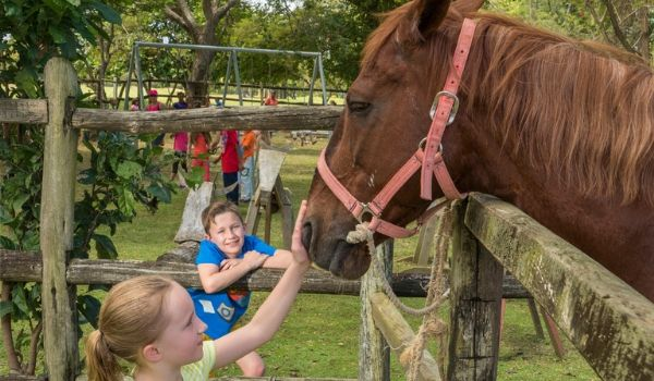 Young girl petting horse