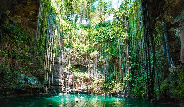 Beautiful cenote with vines hanging down and an opening at the top