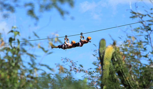 Two people ziplining above cacti in the desert