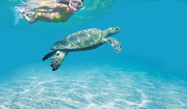Woman snorkelling beside a sea turtle