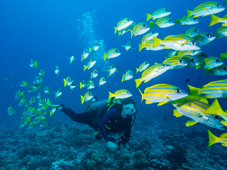 Highly Amazing Cozumel Diving