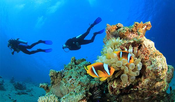Deux plongeurs dans la mer, au-dessus de récifs coralliens et d'une vie marine tropicale.