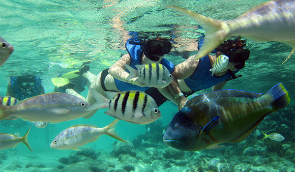 Vacationers snorkelling with schools of tropical fish