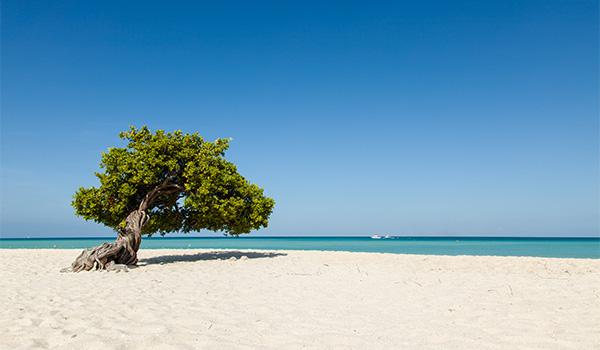 Femme assise dans un arbre regardant la plage