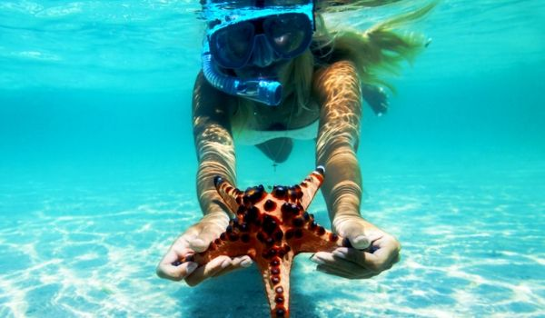 Snorkelling with starfish