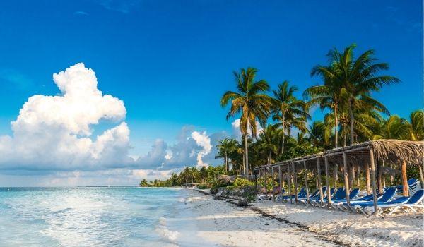 Palm tree-lined shore at Playa Pilar