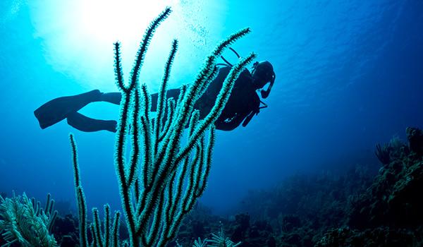 Plongeur sous-marin dans la mer