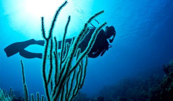 Scuba diver exploring sea