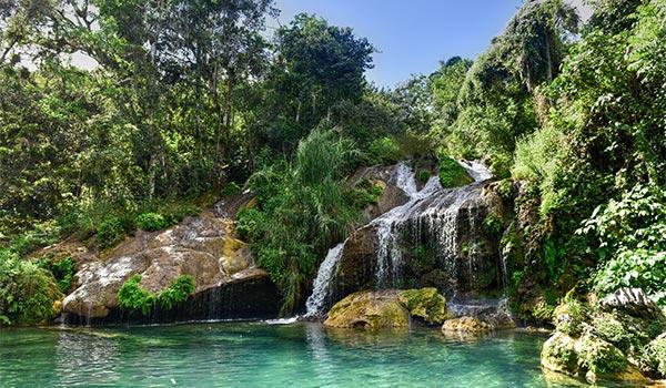 Petite chute se déversant dans une piscine entourée d'une forêt luxuriante