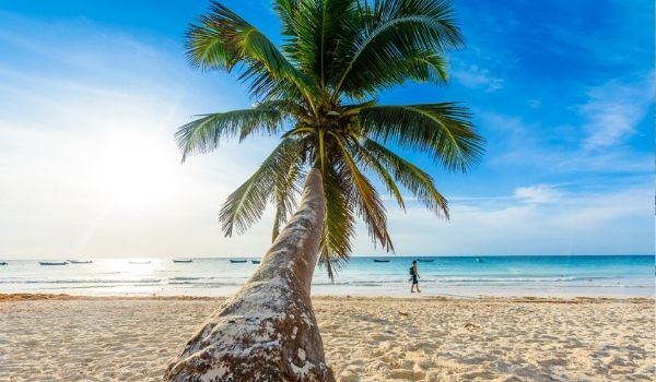 Palm tree on the soft sands of Playa Paraiso