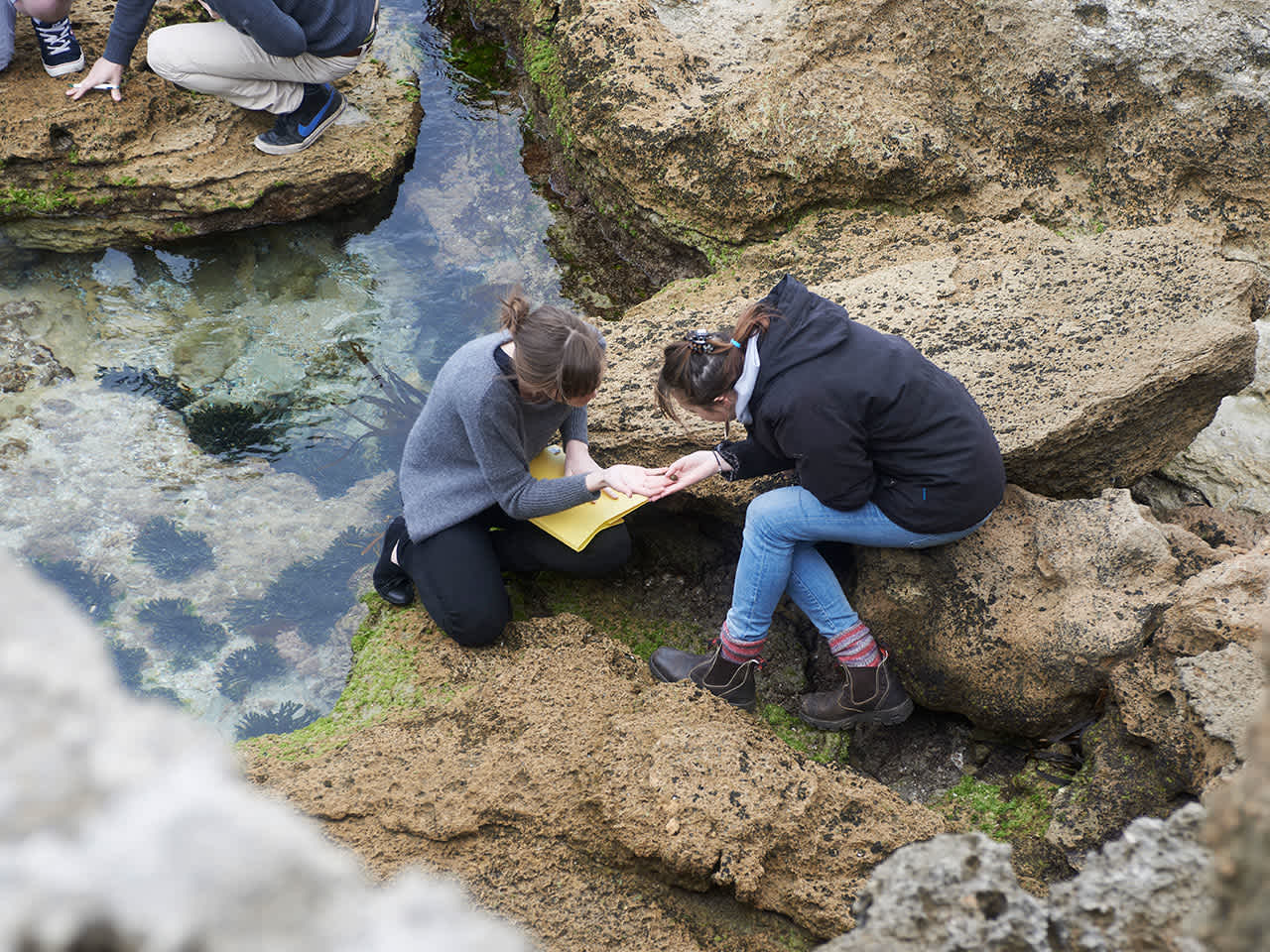 Students examining samples at a reef