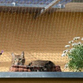 Gattaiole Porte E Reti Di Protezione Per Gatti