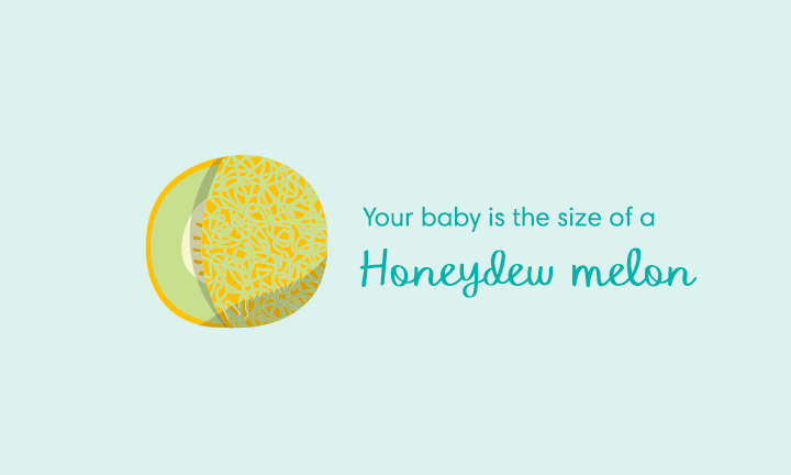 baby size of honeydew melon week 35
