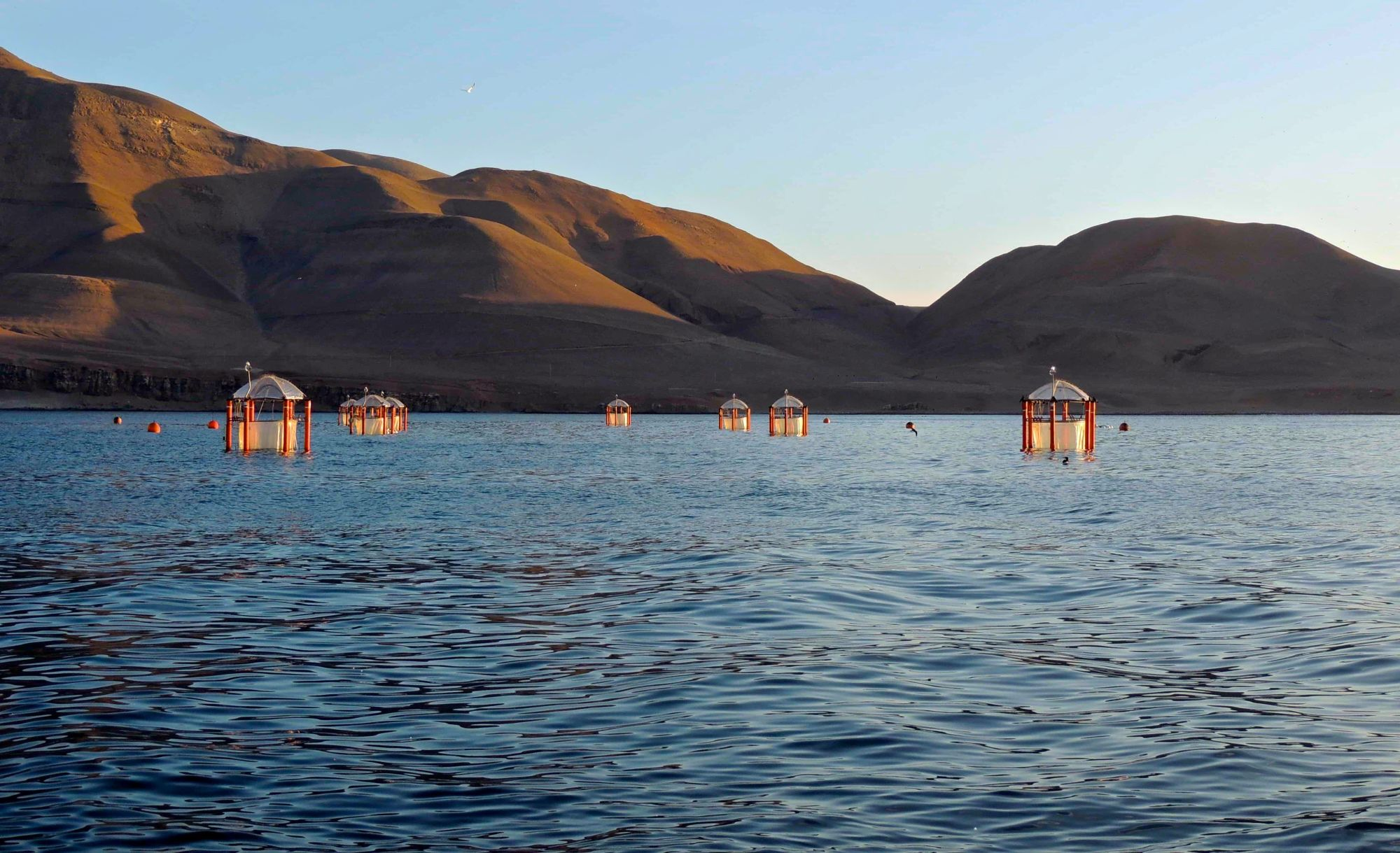 Mesocosms floating off the coast of Peru