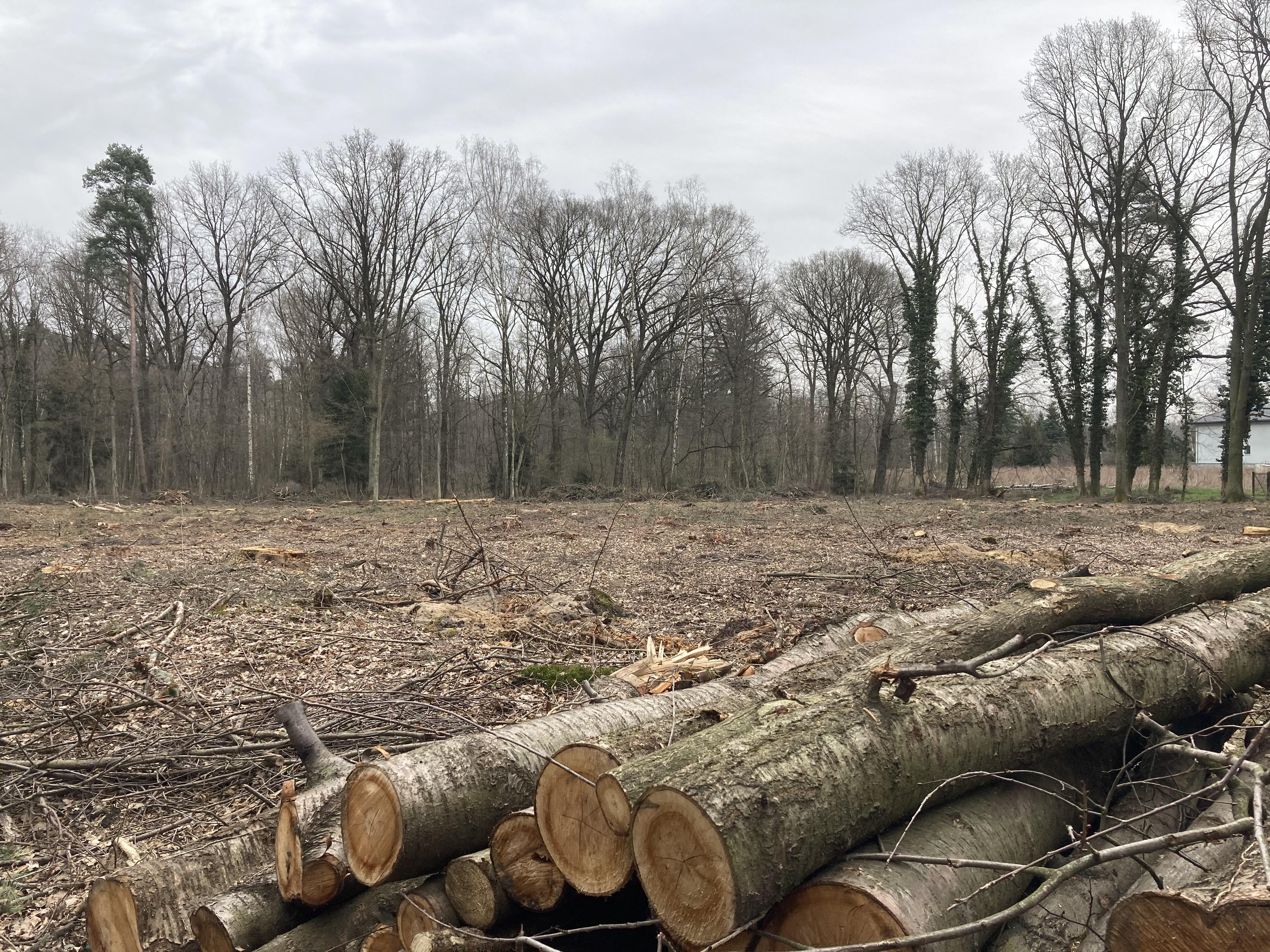 PGE Dystrybucja wycięło drzewa z prywatnej działki, teraz umywa ręce